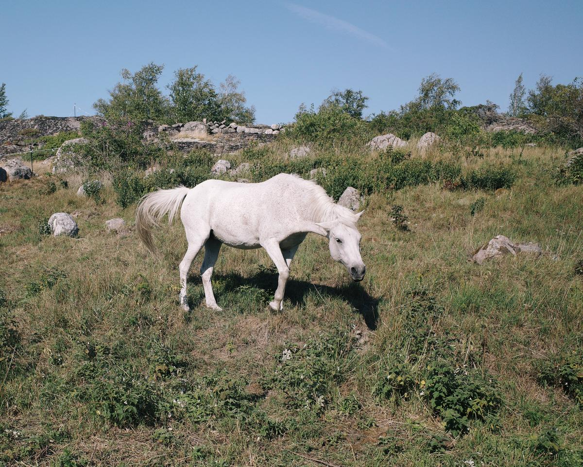 A white horse standing in a meadow. There are a lot of rocks in the background.