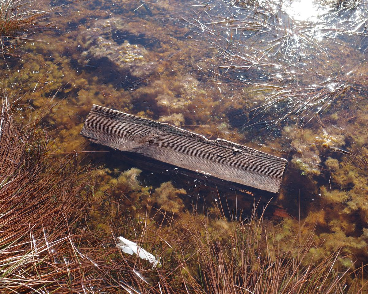 A piece of wooden board in a bog pond