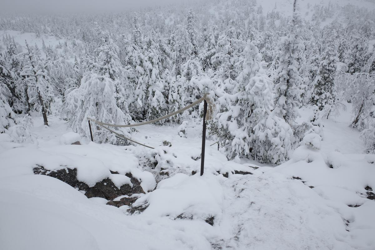 A path amid rocks and snow-covered trees. There's a rope handrail next to the path.
