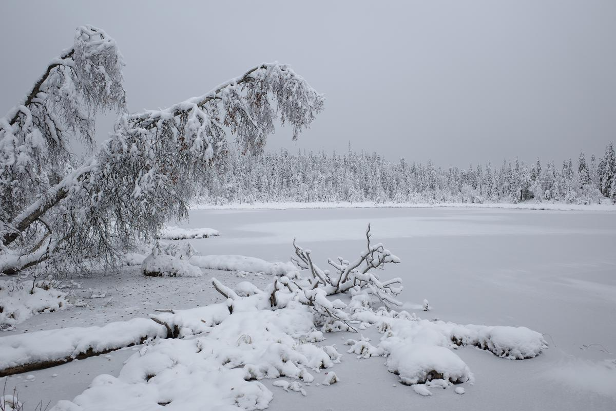 Snow-covered trees hang over a frozen lake